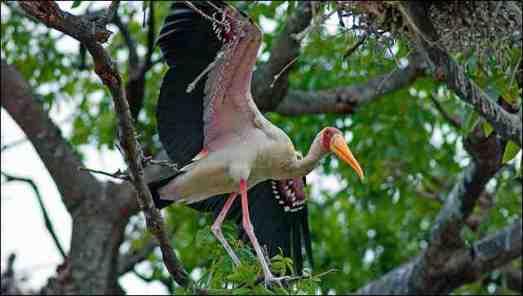 Oiseaux de Casamance 2