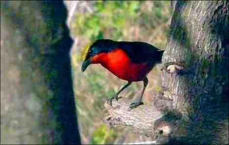 Oiseaux de Casamance